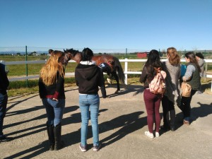 """Próximo curso: """"Prevención de lesiones músculo-esqueléticas en el caballo"""" Madrid septiembre/octubre 2016"""